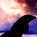 dolphin - dolphins icon