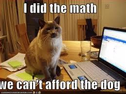 LOL 고양이 again