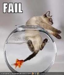 lol gatos