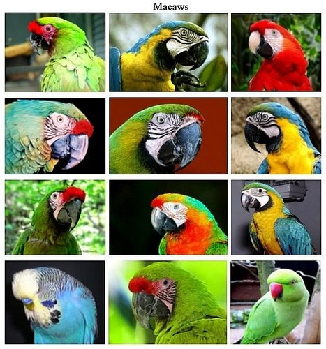 These are all parrots
