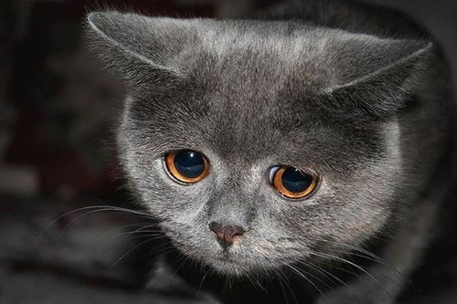 [Image: sad-kitty-our-wolf-pack-30789040-500-333.jpg]
