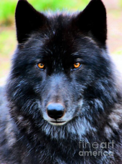 black wolf green eyes-#33