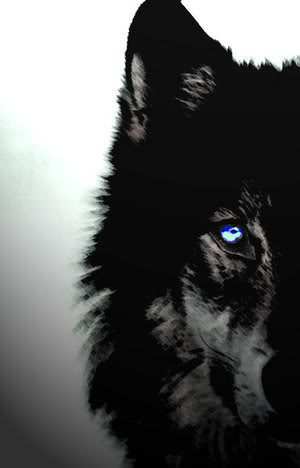 Black Wolves images Black Wolves wallpaper and background ...