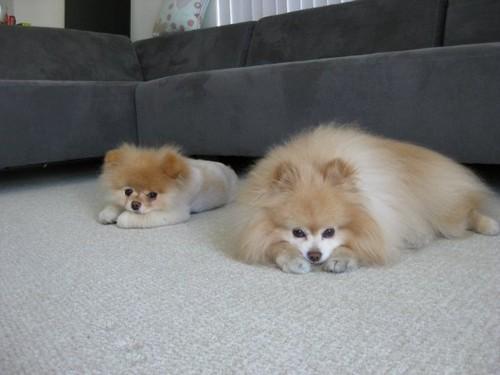 Boo & Buddy!