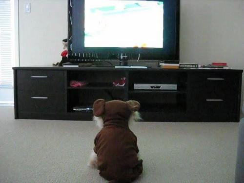 Boo watching TV! :P