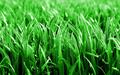 Deep grass