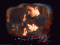 Edward &amp; Bella - twilighters wallpaper