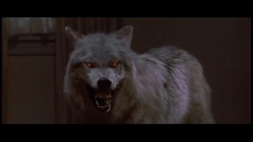 Evil 狼