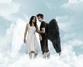 Fallen Angels - twilight-series photo
