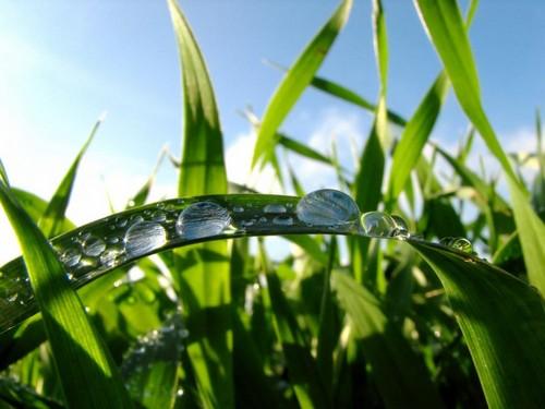 Grass_Sky