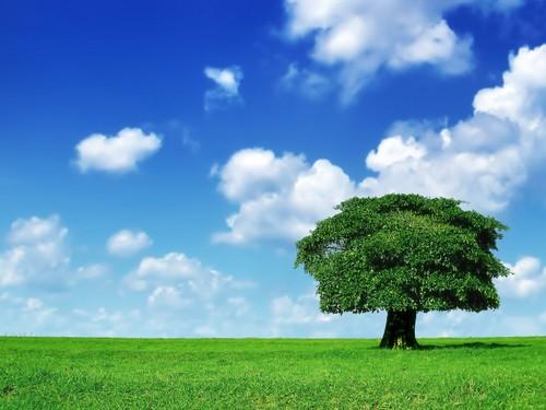 Grass_Sky_Tree