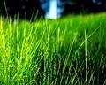 Grass_The