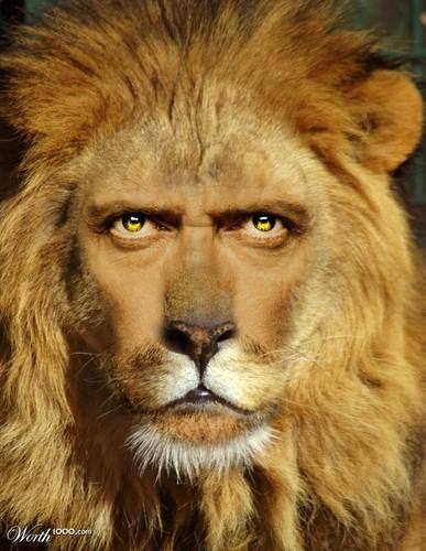 Hugh Laurie Lion