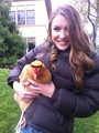 It's a chicken! - nathalia-ramos photo
