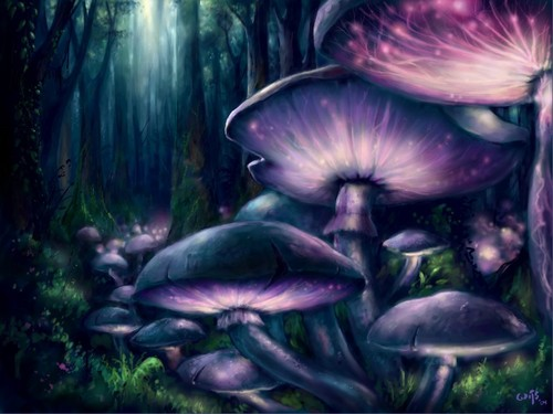 Mushrooms Anyone!!! ><><Drifting Spirit><><