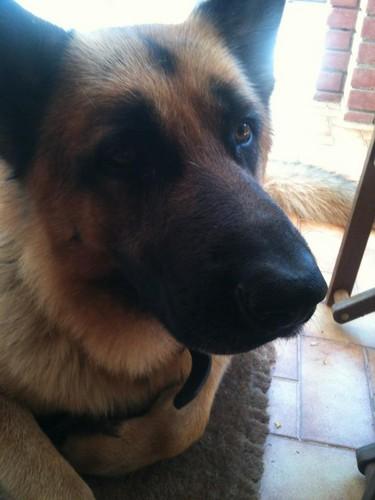 My doggie Tobbie