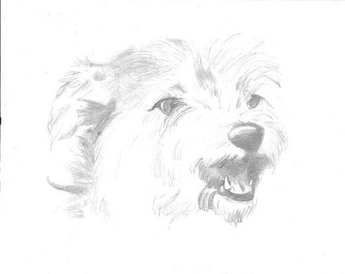 My old dog Max
