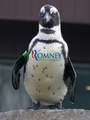 Penguins for Mitt!