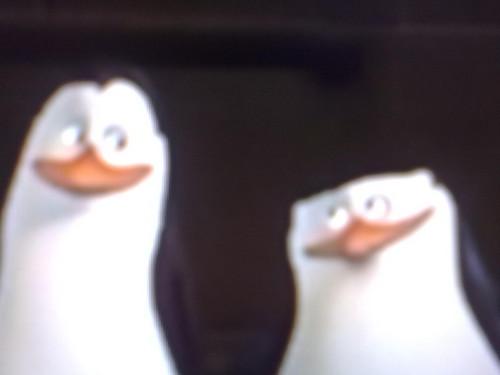 Skipper und Kowalski