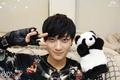 Tao panda 2