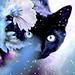 black cat - the-crazy-cat-ladies icon