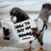 funny animals - animal-humor icon