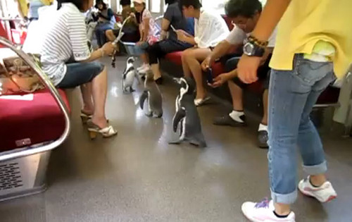 penguins real life