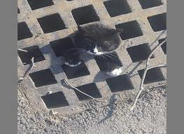 penny got stuck in a sewer cover - cats Photo