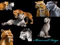 shiraxdiego collage