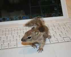tiny little squirrel's can't use computers