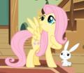 ♥ Fluttershy ♥