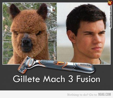 Celebrity Animal Look Alikes