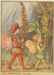 Fantasy wallpaper probably containing anime entitled Agrimony Fairies