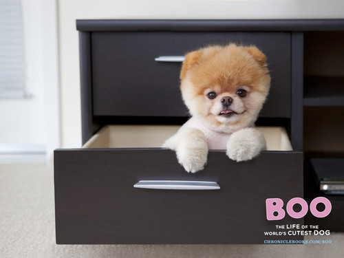 Boo in a drawer