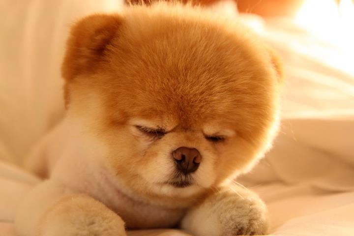 Boo sleep :)