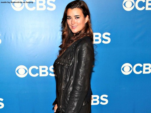 Cote de Pablo wallpaper