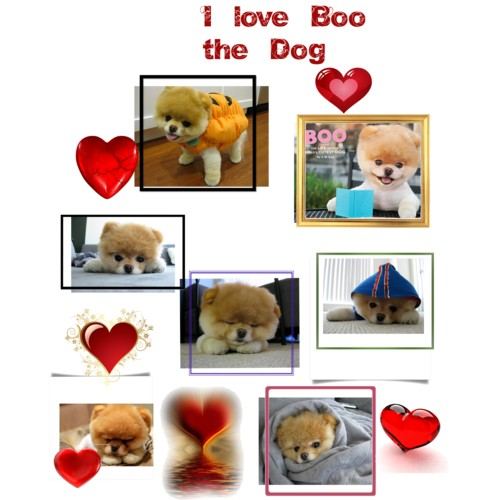 I cinta Boo the dog!