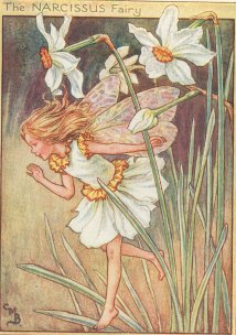 narsisis, narcissus Fairy