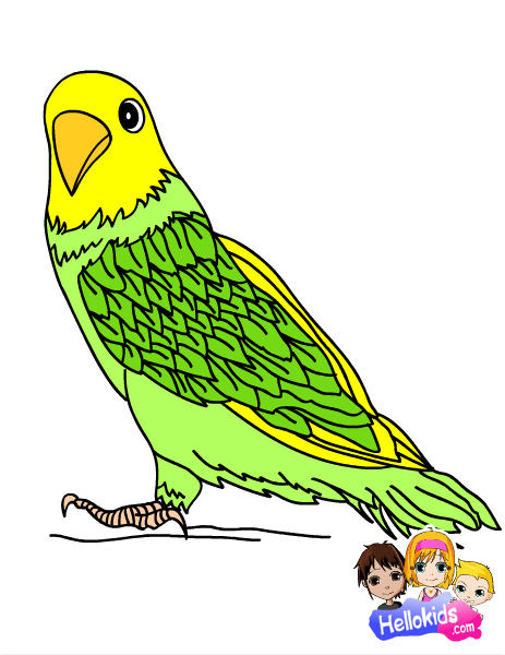 Sydni2001 Images Parakeet Coloring Page D Wallpaper And Background