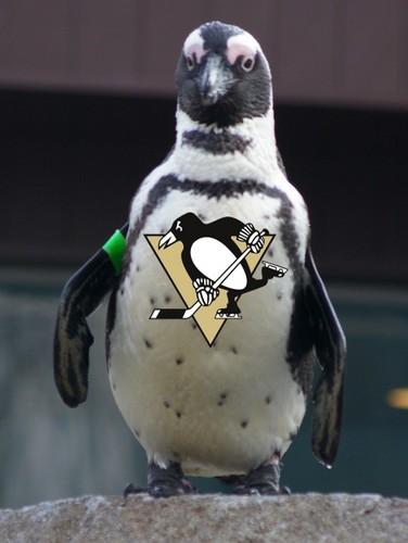 Penguins for Penguins!