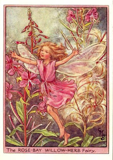 Rose-Bay Willow-Herb Fairy