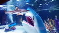 Shark! - tanked-animal-planet photo