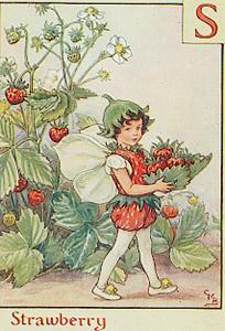 stroberi Fairy