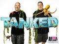 Sup - tanked-animal-planet photo