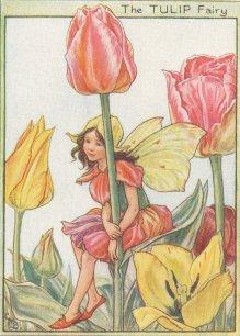 bunga tulp, tulip Fairy