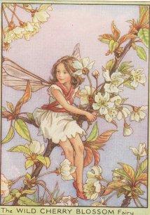 Wild 체리 Blossom Fairy