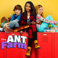 ant farm - ant-farm photo