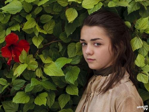 Weibliche TV-Figuren Hintergrund with a kapuzinerkresse entitled Arya Stark