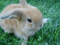 Bentley - rabbits photo