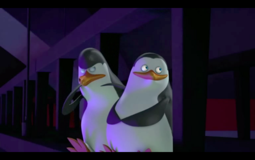 Kowalski... You know better than to chew your flippers... XD - penguins-of-madagascar Photo